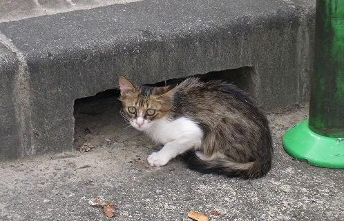 24子猫ちゃん