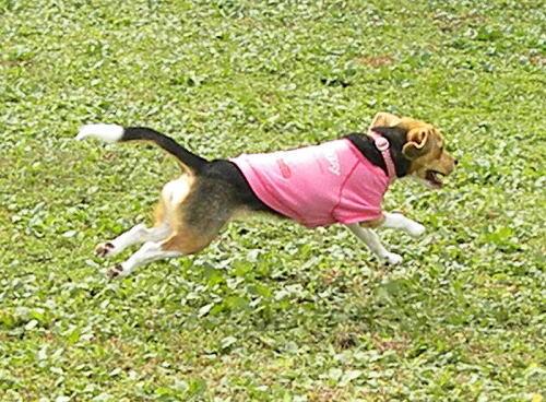 6ゆめっち飛行犬