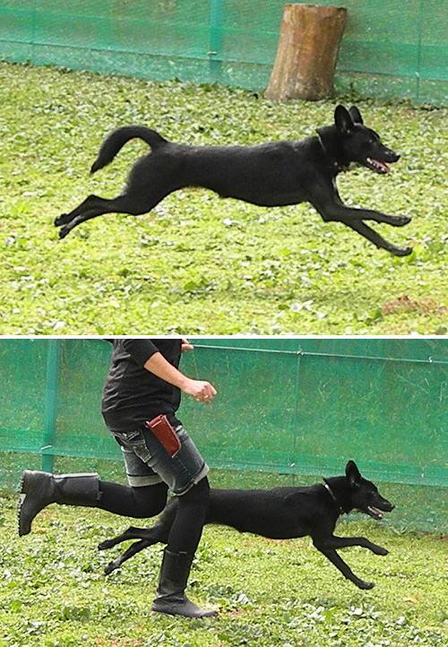 9蛍ちゃん飛行犬