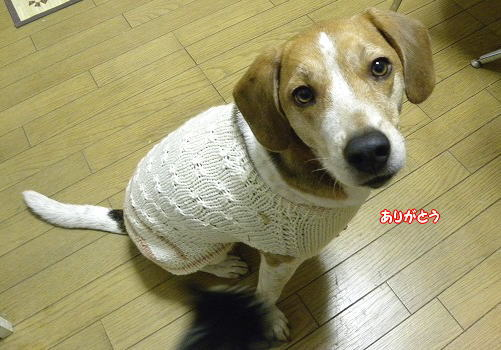 1セーター