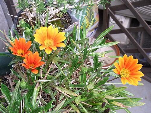 1お母さんの花