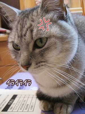 2010492.jpg