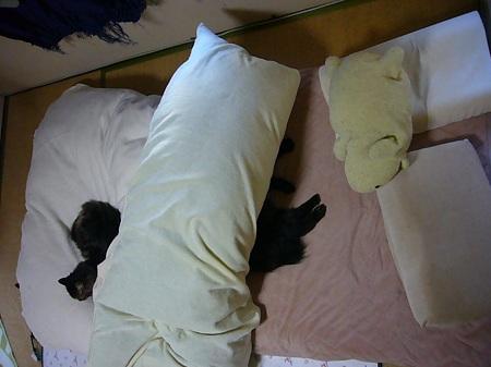 こうして寝てます