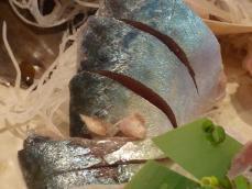 魚金2 (11)
