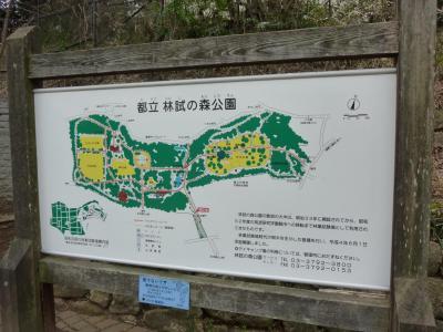 林試の森 (1)