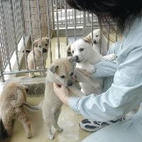 譲渡を待つ子犬たち