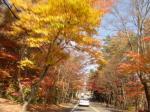 軽井沢の紅葉の道