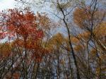魚止の滝近くの紅葉