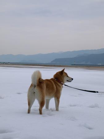 雪は楽しいなぁ!