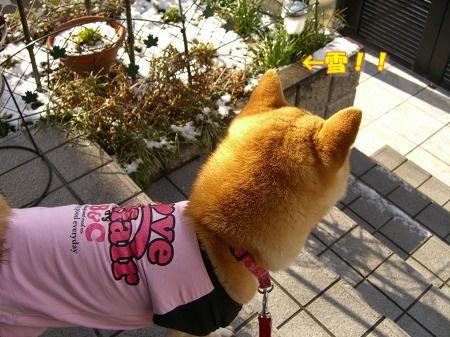 散歩に行くよ~