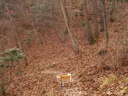 木の葉隠れの術~