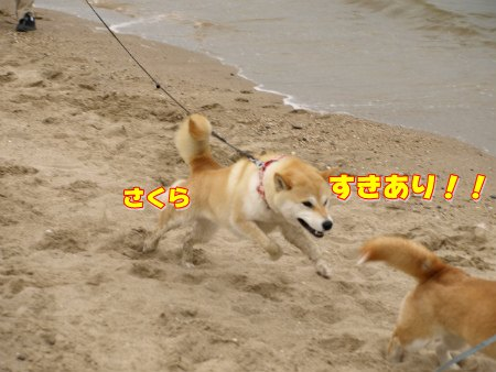 すきあり!!