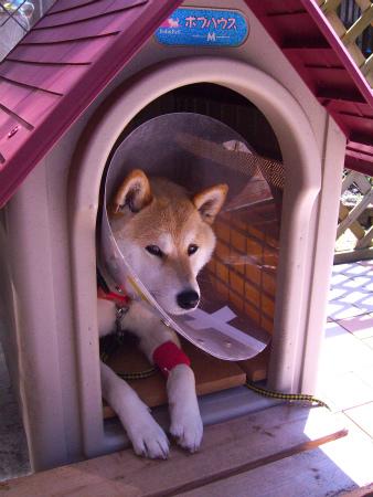 犬小屋へ!!