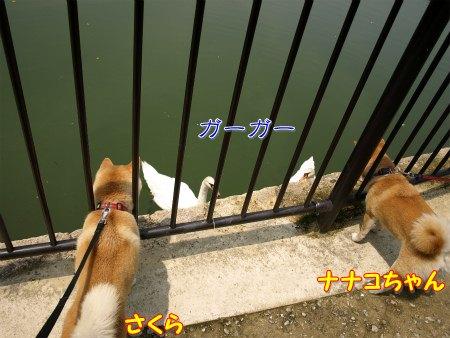 野次犬コンビ♪