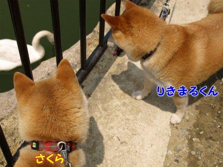 野次犬カップル