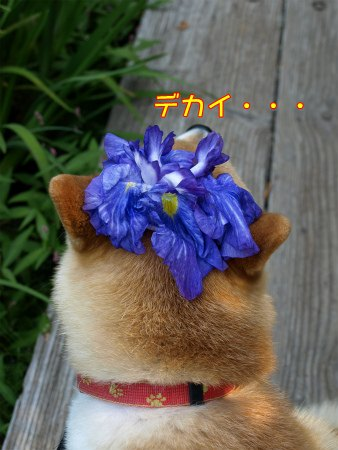 デカイ花!