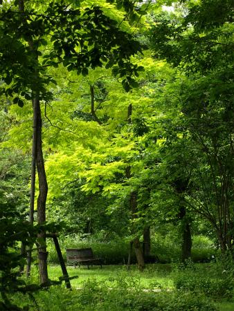 癒しの森♪