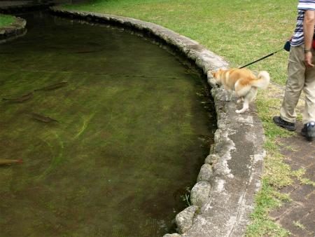 観察池にて