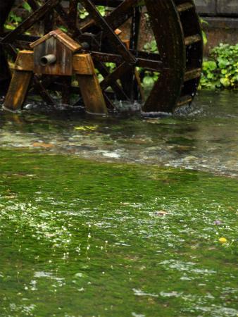 水車と梅花藻