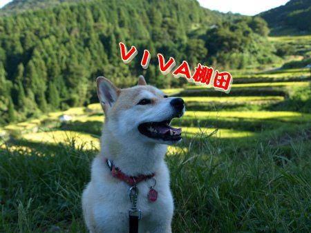 VIVA棚田♪