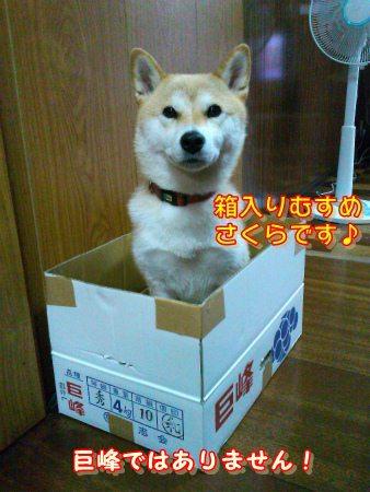 箱入り娘♪