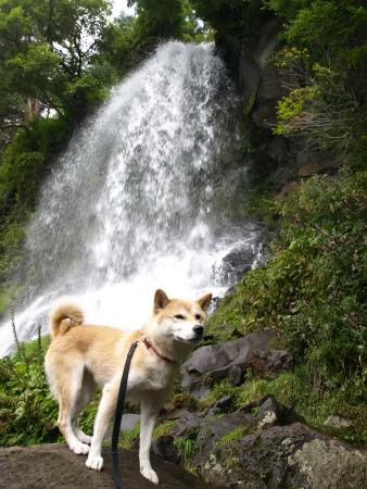 さくらと乙女の滝
