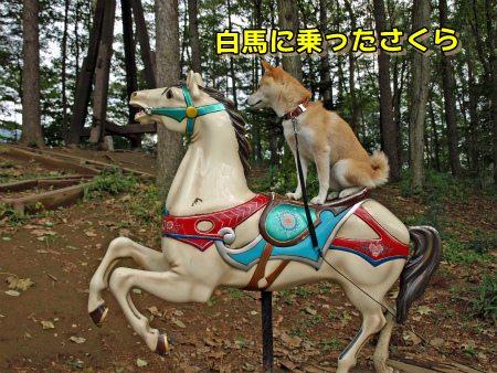 白馬に乗ったさくら