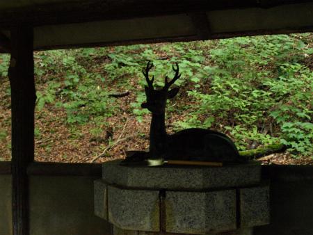 鹿だ~!!