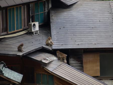 サルが~~