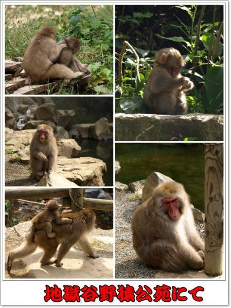 野猿公苑にて