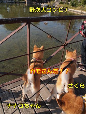 野次犬コンビ