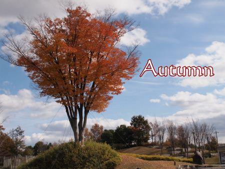 秋の有馬富士公園