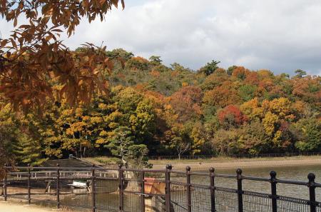 池のほとりの紅葉