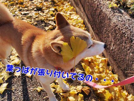 葉っぱが~!
