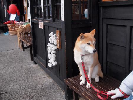 待つ犬・・・
