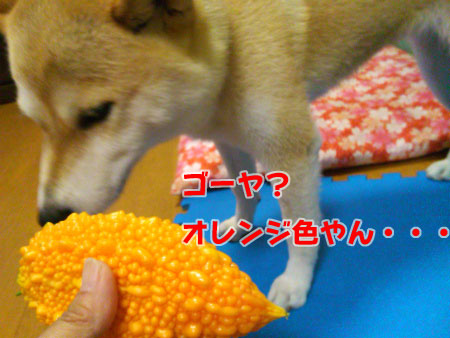 オレンジ色!