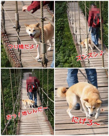 吊り橋で揺らされる!!