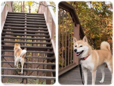 階段登って紅葉~♪
