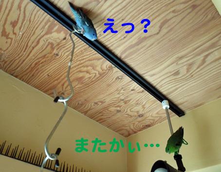 DSCN0927.jpg