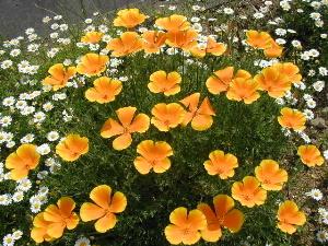 ぱっと明るい花です