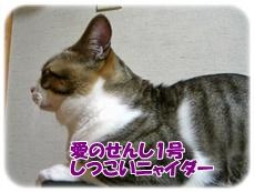 200909251.jpg