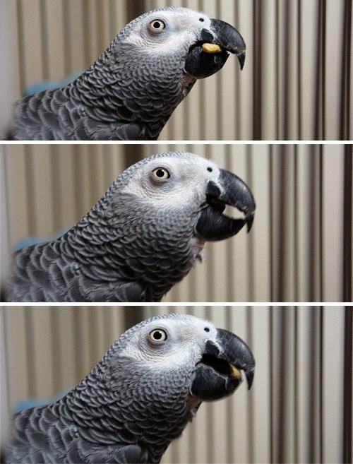 ペレットを食べるChloe
