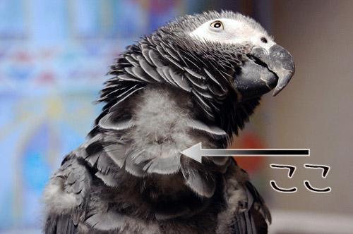 Jean-Lucの赤い羽