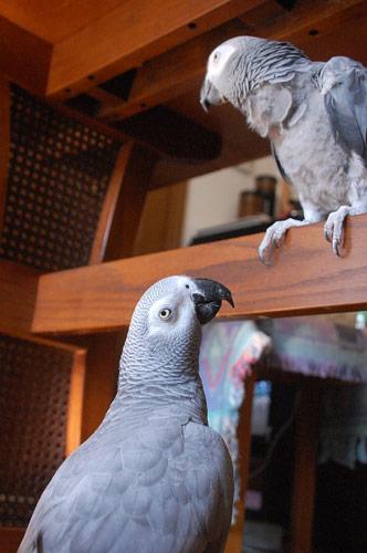 テーブル下のJean-LucとChloe