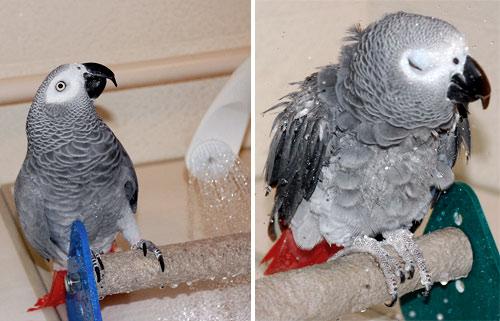 シャワー中のJean-LucとChloe