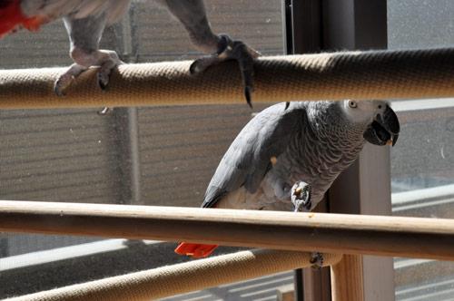 窓辺でピーナツをいただくchloe