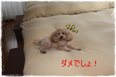 2011_1119_090142-IMG_4870.jpg