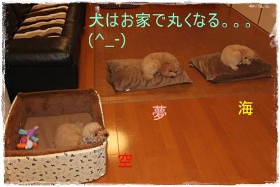 2011_1201_222446-IMG_4944.jpg