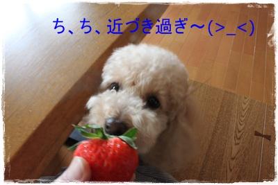 2011_1204_125018-IMG_4965.jpg