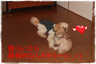 2011_1206_153235-IMG_5007.jpg